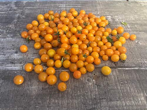 Gelbe Johannisbeertomate -Wildtomate,Buschtomate- 10 Samen RARITÄT