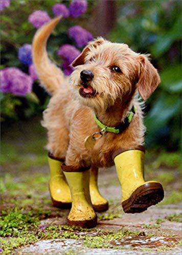 Avanti Puppy in Garden Cute Dog Get Well Card