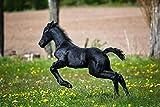Rompecabezas 1500 Piezas De Madera Pequeño Prado De Flores Amarillas Corriendo Pony Regalo Di Compleanno