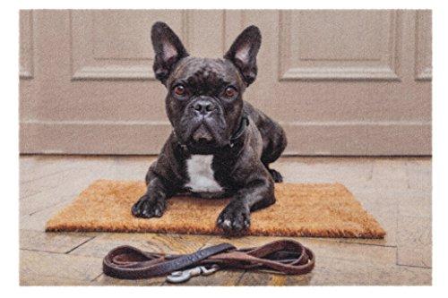 teppich-world Fussmatte - Fußmatte - Schmutzabstreifer - Sauberlaufmatte - Türfußmatte - Fußabstreifer - Fußabtreter - Türmatte - Motivfußmatte - Fußmatte - Schmutzfangmatte - Bulldogge - Hund
