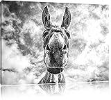 Lustiger Esel Kunst B&W, Format: 60x40 auf Leinwand, XXL