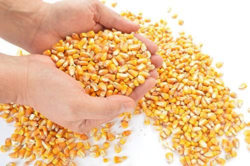 Samore 25 kg Futtermais Mais gelb - schneller Versand mit DHL