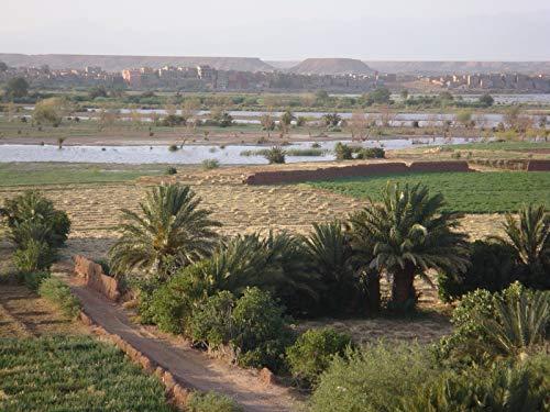 Marokko geht gegen die Wüste