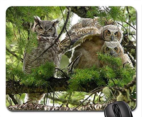 Podkładka pod mysz, Made Eagle Owl Family Podkładka pod mysz, podkładka podkładka pod mysz (ptaki pod mysz)