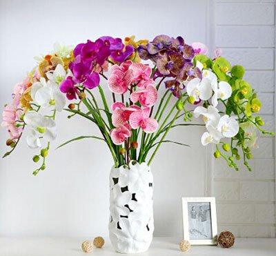 Fleur exotique Orchidée Graines Cattleya Multicolor Papillon Orchidee Bonsai Monoflord Mini jardin plante facile à cultiver 200 pcs/sac 2