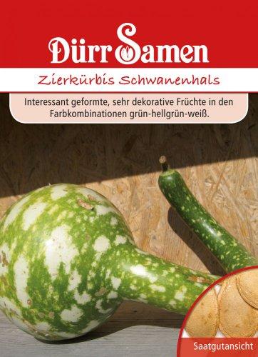 Dürr-Samen Zierkürbis Schwanenhals
