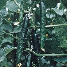 Best tasty king cucumber Reviews