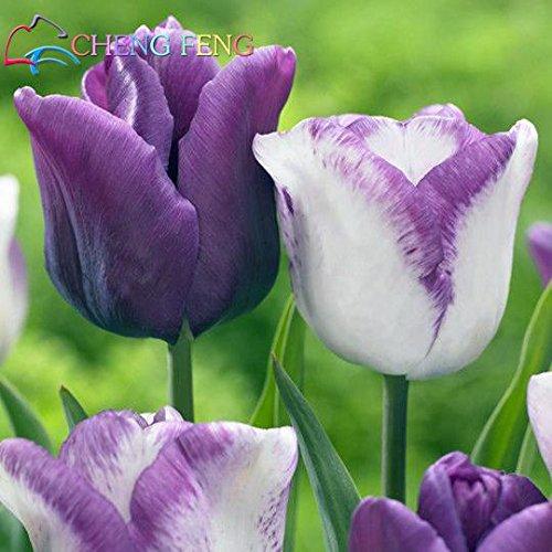 50 pièces de haute qualité Graines de fleurs Jardin Tulipe graines Bonsai Graines Balcon Pot plus belles plantes colorées * semences non bulbes de fleurs vert clair