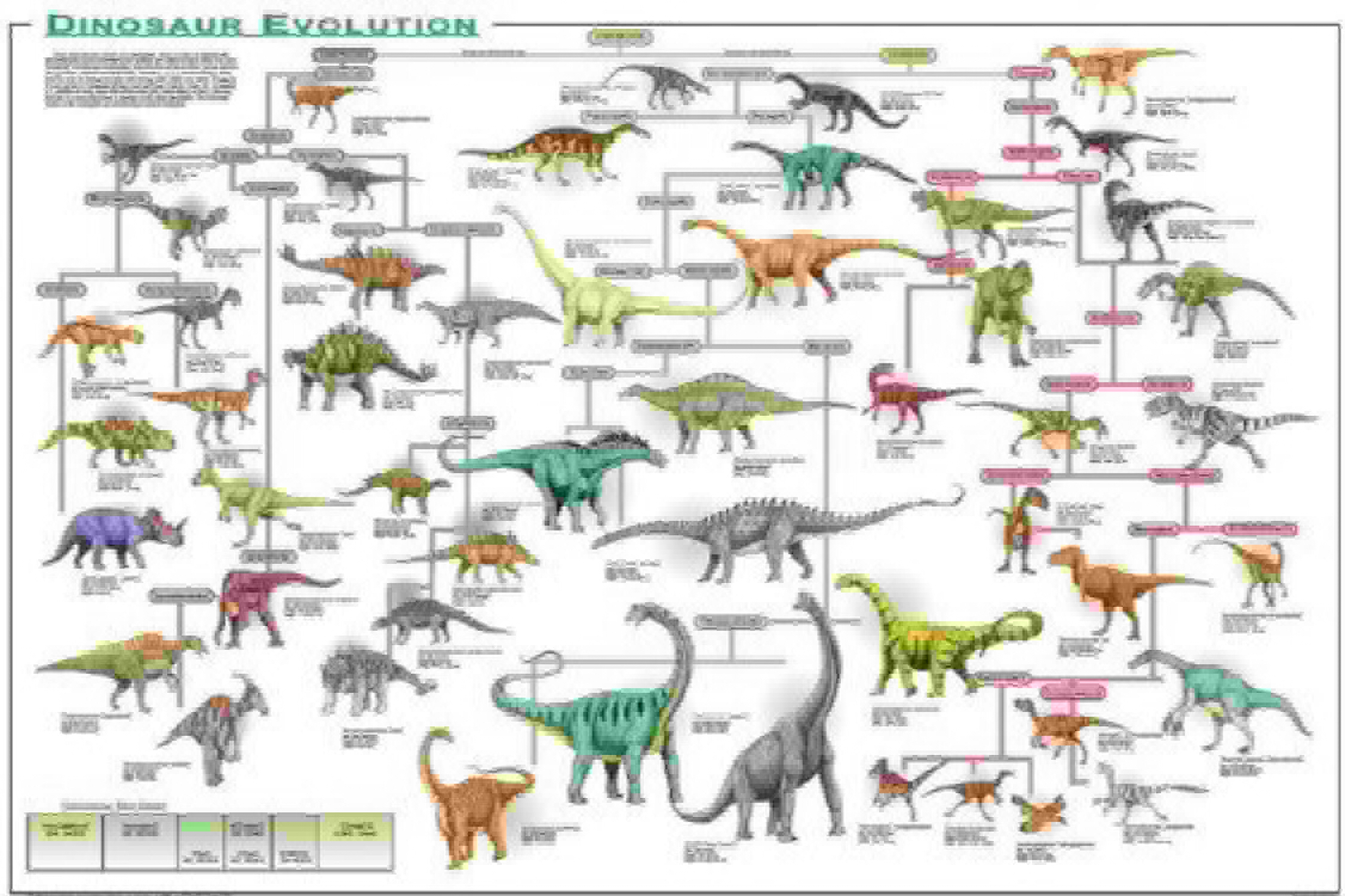 estar en gran demanda Laminated Laminated Laminated Dinosaur Evolution Educational Science Chart Poster (24x36) by Poster Revolution  a precios asequibles