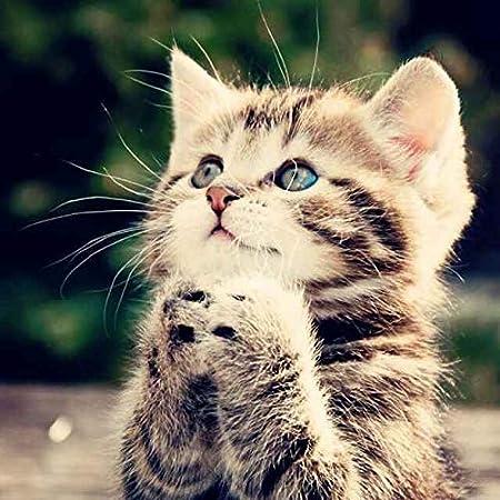ATAKA ペットひんやりシート 犬猫 多用途 ひえひえ爽快 犬クール 冷却マット 熱中症対策 猫ひんやり グッズ 涼感冷感マット パッド ひんやり ペットクールマット 犬用ひんやり 涼しい ペットベッド夏用 猫 冷えマット エコクーラー 夏 犬猫ペットひんやりマット ペット 冷却 マット ベッド 犬 猫 う青M