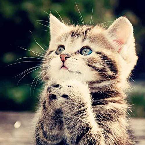 ATAKA ペットひんやりシート 犬猫 多用途 ひえひえ爽快 犬クール 冷却マット 熱中症対策 猫ひんやり グッズ...