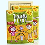 TickleMe Plant Seeds Packets (2) for Party Bag or Christmas Stocking Stuffer! Leaves Fold Together When You Tickle It. Great Science Fun, Green and Educational. Easy to Grow Indoors. It Can Flower.