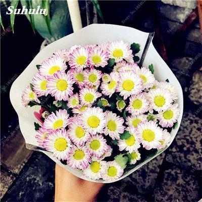 Grosses soldes! 50 Pcs Daisy Graines de fleurs crème glacée parfum de fleurs en pot Chrysanthemum jardin Décoration Bonsai Graines de fleurs 19