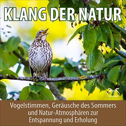 Kleiber Vogel Gesang - kleiner roter Vogel singt sein Lied