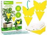EcoCanucks Sticky Traps (20 Pack) | Sticky Fruit Fly Traps & Gnat Traps