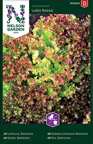 Batavia Salat Samen Lollo Rossa - Nelson Garden Gemüse Saatgut - Pflücksalat Samen (960 Stück) (Einzelpackung)