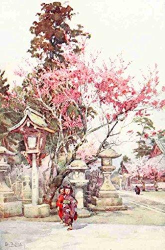 A4 foto Du Cane Ella 1874 1943 Plum bloesems & lantaarns Bloemen & Tuinen van Japan 1908 Print Poster