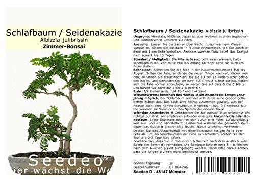 Seedeo® Seidenakazie/Schlafbaum (Albizzia julibrissin) Bonsai 50 Samen