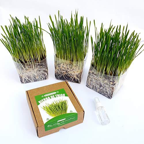 Garden Pocket Microvegetales Pop UP - Kit de Interior de ger