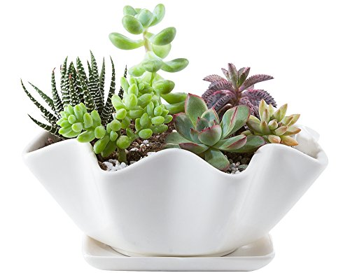 Mkono 6-Inch White Ceramic Succulent Plant Pot with Saucer Modern Cactus Planter Decorative Planting Bowl with Drainage Hole