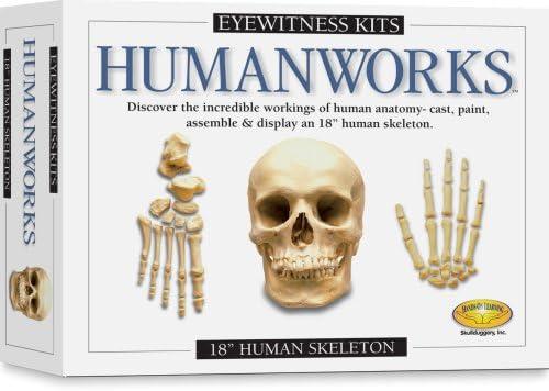 Eyewitness Kits Humanworks Human Craft Ranking Discount mail order TOP3 Skeleton Kit