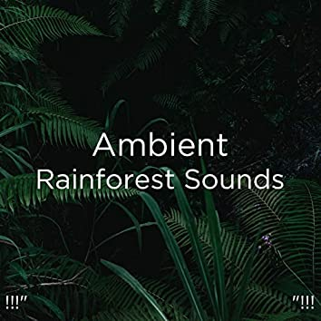 "!!!"" Ambient Rainforest Sounds ""!!!"