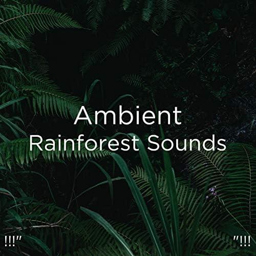 Nature Sounds Nature Music, Nature Sounds & BodyHI