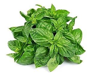 Fresh Basil - Leaves, 100 g