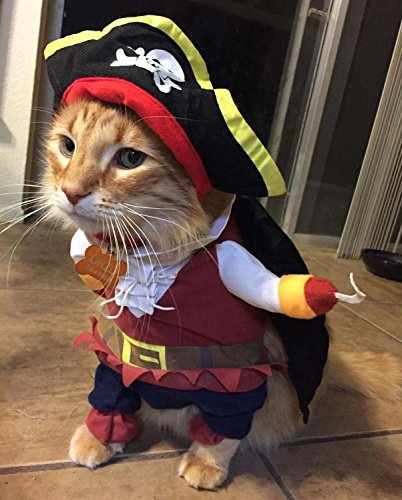 Pirate Halloween Costume for Small Cats