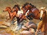 5D Diamante Pintar Por Número Kits Pintura De Diamantes Diseño Abstracto De Animales de caballo -40x30cm