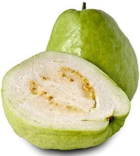 Best apple guava plant Reviews