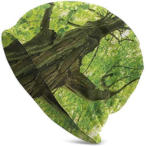 Viejo árbol Grande Medio Ambiente Campo Eco Solidaridad...
