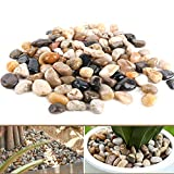 Anothera 3 LB 1/2'-1' Fine Polished Pebbles for Plants Natural River...