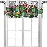 Cortinas de cocina con cenefas Saguaro Barril de seto cerdo espinoso pera Opuntia Tropical Botany Garden Plants Print, 91.44 cm de ancho x 45.72 cm de largo, cortinas para ventanas, multicolor