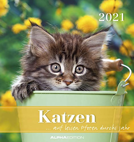 Katzen 2021 - Postkartenkalender 16x17 cm - Cats - zum aufstellen oder aufhängen - Geschenk-Idee - Gadget - Alpha Edition