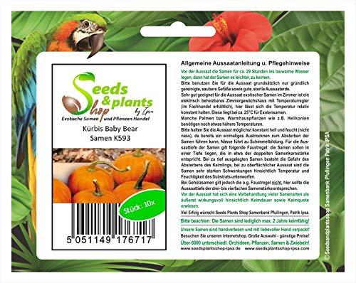 Stk - 10x Kürbis Baby Bear - Kürbis Samen Gemüse K593 - Seeds Plants Shop Samenbank Pfullingen Patrik Ipsa