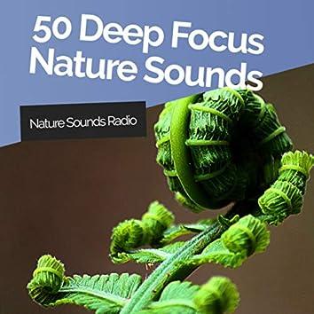 50 Deep Focus Nature Sounds