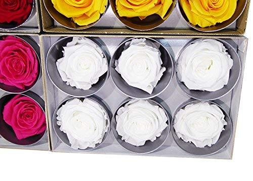 Verdissimo Teste di Rosa conservate, 6Pezzi, Bianche, Altezza Diametro 5–5,5cm
