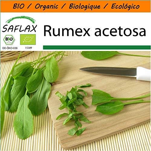 SAFLAX - Jardin dans le sac - BIO - Oseille commune - 400 graines - Avec substrat de culture dans un sac de levage facile à manipuler. - Rumex acetosa