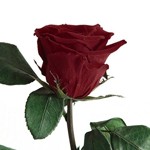 Duftrose Ewige Rose, haltbar 3 Jahre konservierte Rose die eine Ewigkeit blüht ROSEMARIE SCHULZ® (Dunkel Rot)