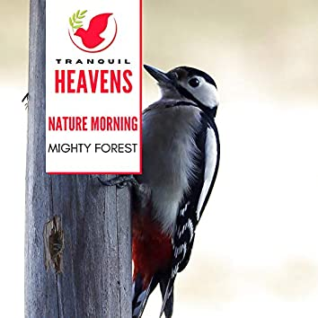 Nature Morning - Mighty Forest