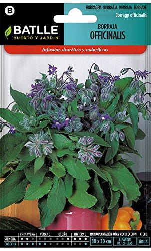 Semillas aromáticas de Battle - Borraja Officinalis (6g)