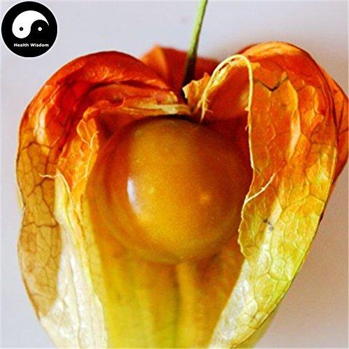 Acheter Physalis Pubescens Fruits Graines de plante chinoise Lanterne Fruit Cerise