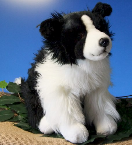 Border Collie 12