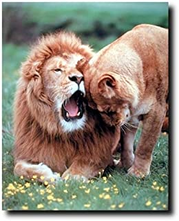 Lion with Cub Wall Decor Picture Wild Animal Art Print Poster (16x20)