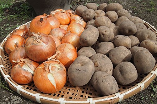 玉ねぎ 北海道産 有機ジャガイモと玉ねぎ(各2kg)4kgセット 甘くてホックホク 産地直送 通販