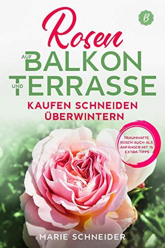 Rosen auf Balkon und Terrasse - Kaufen...