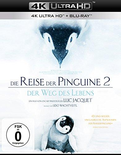 Die Reise der Pinguine 2 - Der Weg des Lebens (4K Ultra HD) (+ Blu-ray 2D)