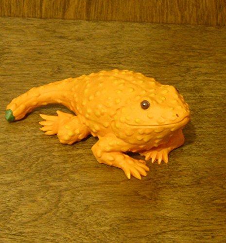 Crookneck Squash Bearded Dragon
