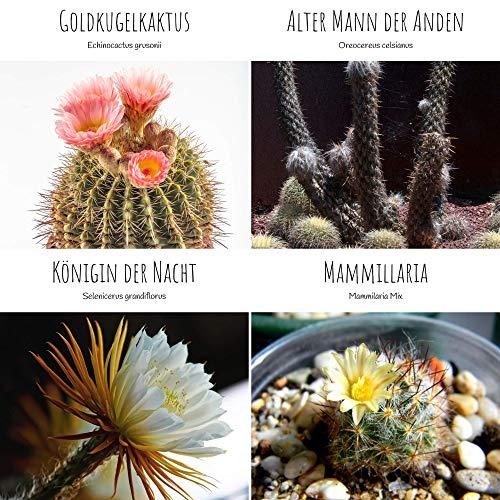 Außergewöhnliche Kakteen Samen mit hoher Keimrate - Sukkulenten Samen Set für deinen eigenen wunderschön blühenden Kaktus (4er Set Samen Mix)